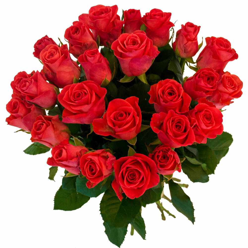 Картинка розы букет на прозрачном фоне